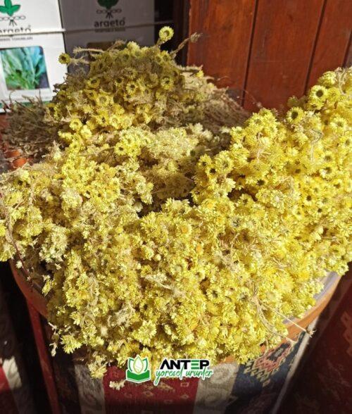altın otu bitkisi
